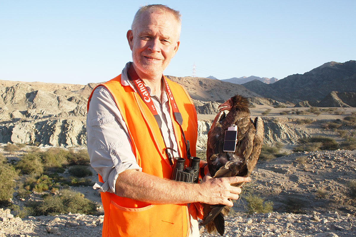Mr. Mike McGrady, the Egyptian Vulture and our logger. Photo: Mike McGrady.